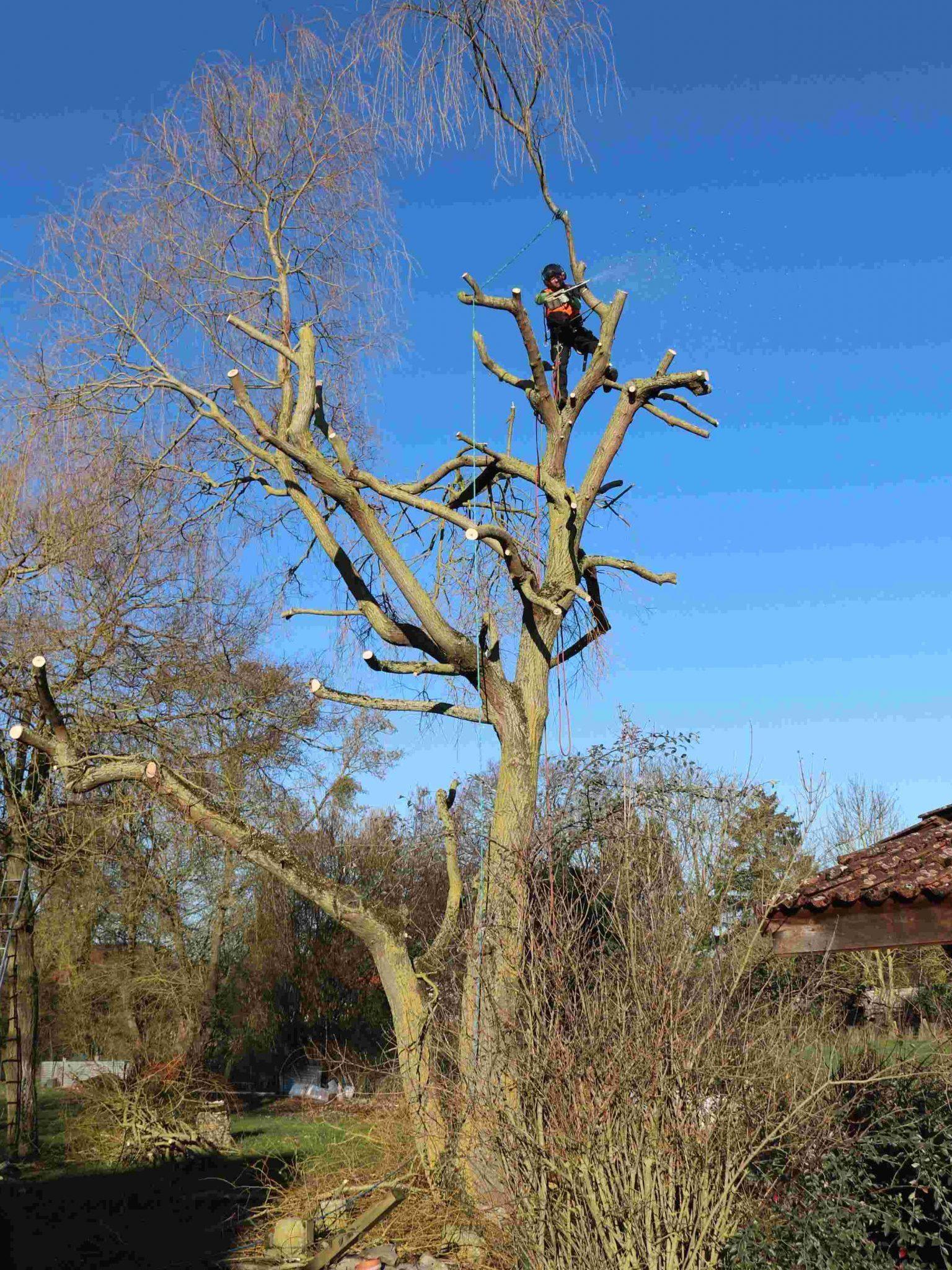 Colver créateur jardin paysagiste oise noyon compiègne élagage arbre risque abattage élagueur grimpeur