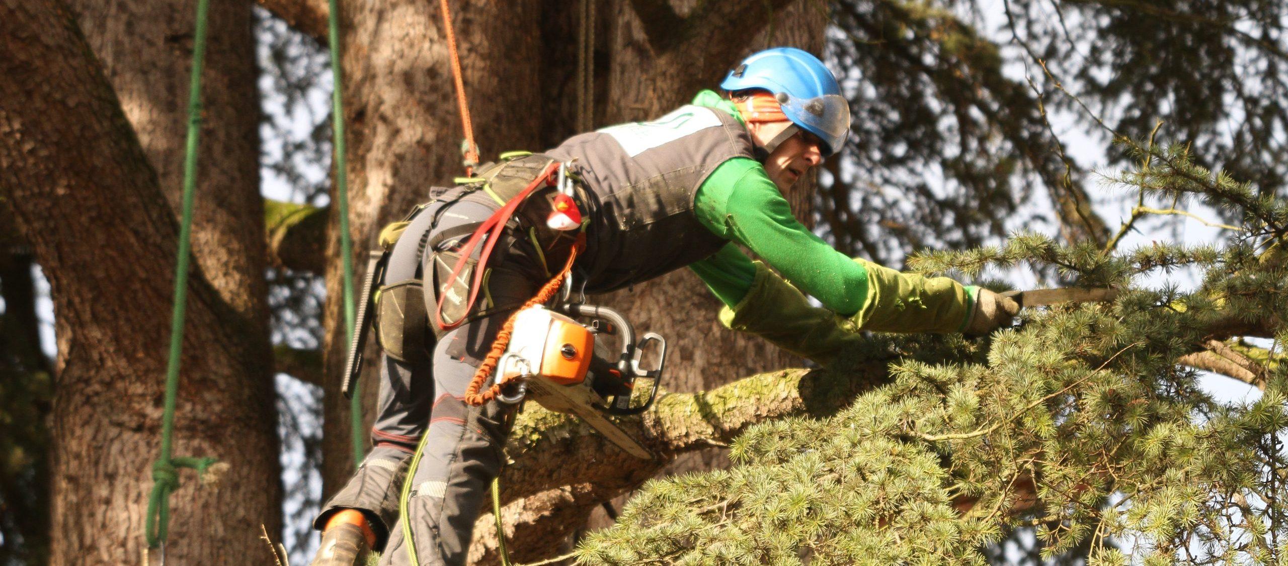 Colver créateur jardin paysagiste oise noyon compiègne élagage haubannage arbre dangereux élagueur